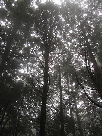 南投竹山杉林溪-爬山初體驗-【水漾森林+鹿屈山】_27.JPG