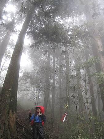 南投竹山杉林溪-爬山初體驗-【水漾森林+鹿屈山】_30.JPG