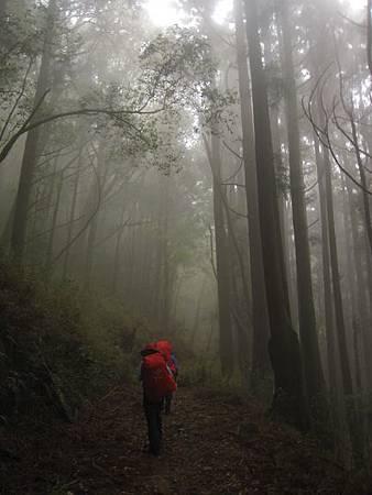 南投竹山杉林溪-爬山初體驗-【水漾森林+鹿屈山】_35.JPG