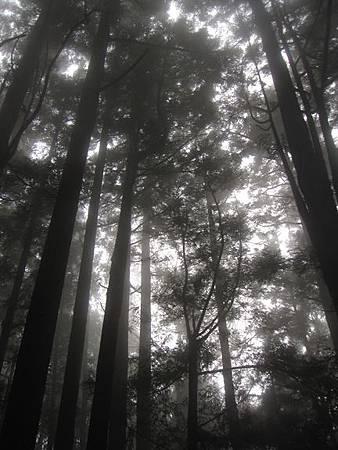 南投竹山杉林溪-爬山初體驗-【水漾森林+鹿屈山】_36.JPG