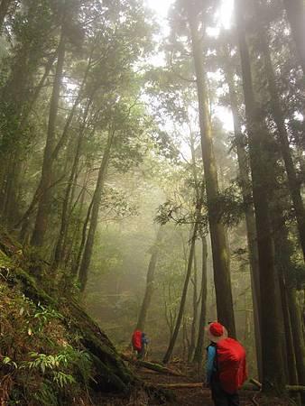 南投竹山杉林溪-爬山初體驗-【水漾森林+鹿屈山】_38.JPG