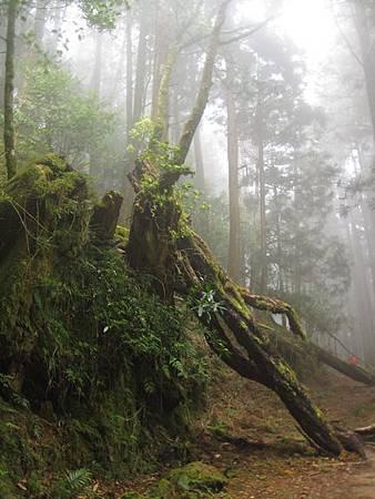 南投竹山杉林溪-爬山初體驗-【水漾森林+鹿屈山】_42.JPG
