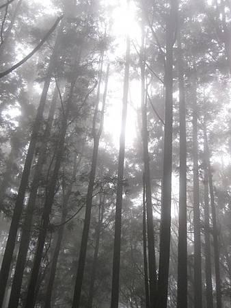 南投竹山杉林溪-爬山初體驗-【水漾森林+鹿屈山】_45.JPG