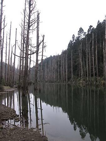 南投竹山杉林溪-爬山初體驗-【水漾森林+鹿屈山】_56.JPG