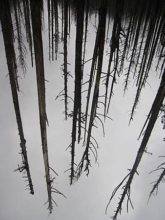 南投竹山杉林溪-爬山初體驗-【水漾森林+鹿屈山】_57.JPG