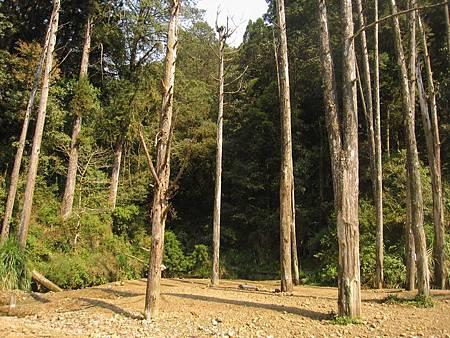 南投竹山杉林溪-爬山初體驗-【水漾森林+鹿屈山】_79.JPG
