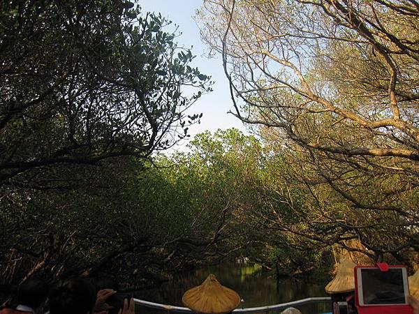 台灣秘境-迷你版亞馬遜河-台南四草生態園區-綠色隧道_15.JPG