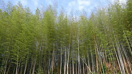 201405日本關西-京都奈良散落美景_6.JPG