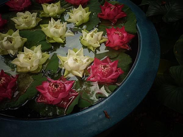 201502春節-泰國曼谷行_48.JPG