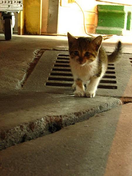 宜蘭的小夥子很帥   小貓也是