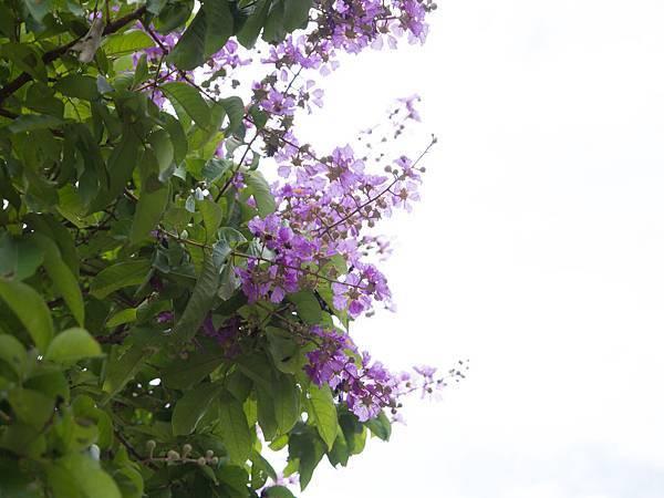 高光無紫邊測試2