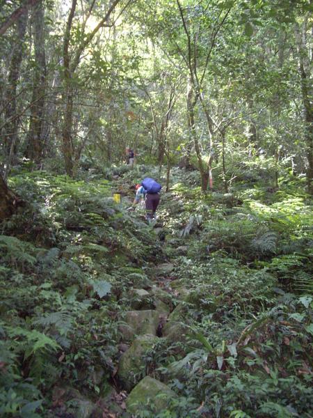 中級山的標準山路~濕濕滑滑.JPG