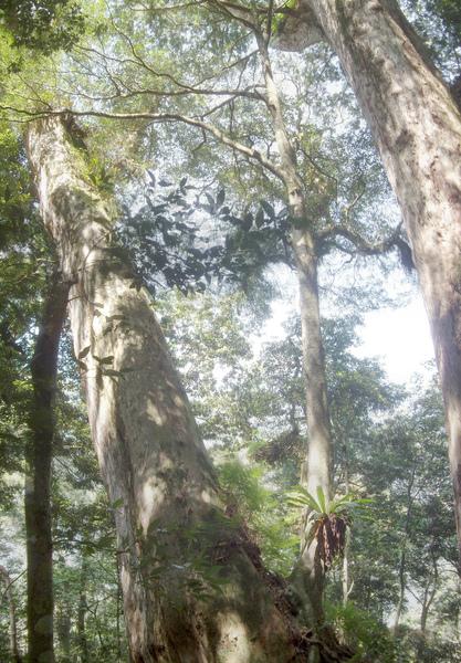 雙生巨木.jpg