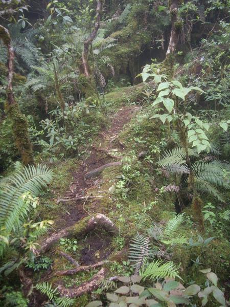 物種超豐富的~有熱帶雨林的FEEL.JPG
