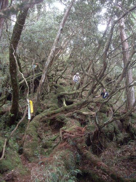 盤根錯結的樹和樹根.JPG