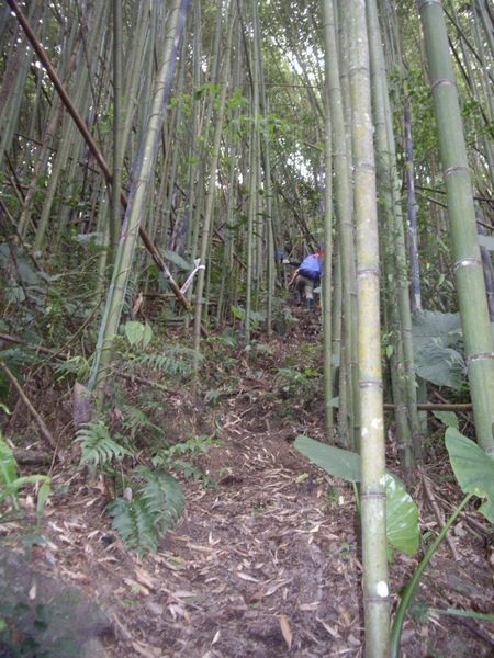 一路陡上至登山口.JPG