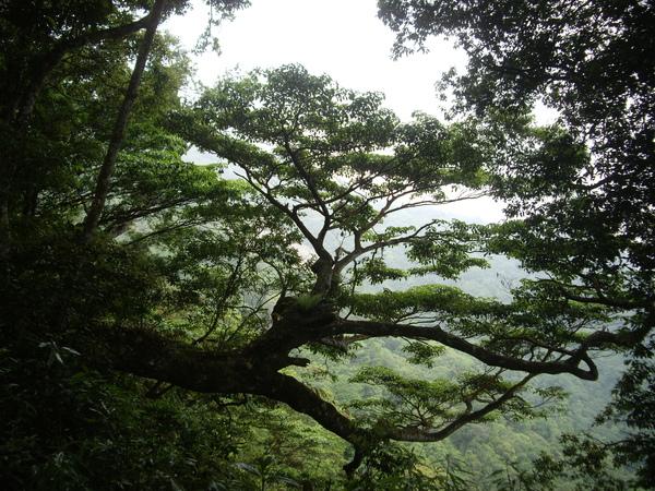日式庭園樹.JPG