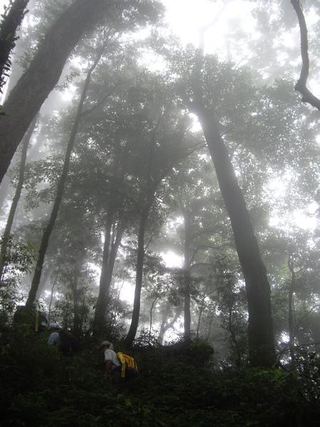 走在迷霧中真的粉讚耶.JPG