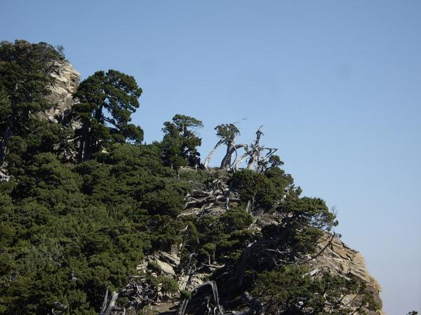 魔戒中的樹人是不是長這樣丫.JPG