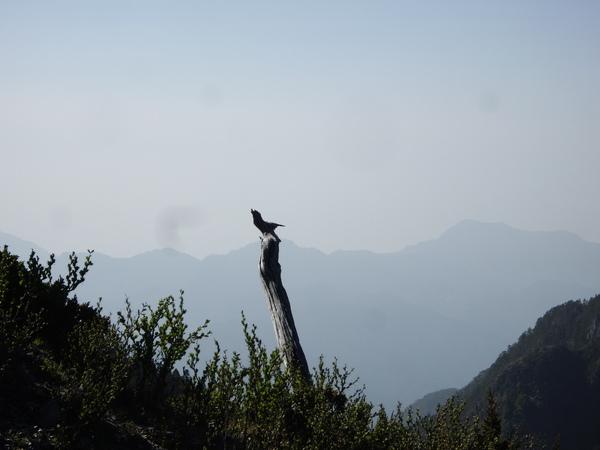 孤鳥在枝頭.JPG
