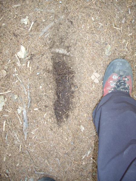 野生動物的腳印.JPG