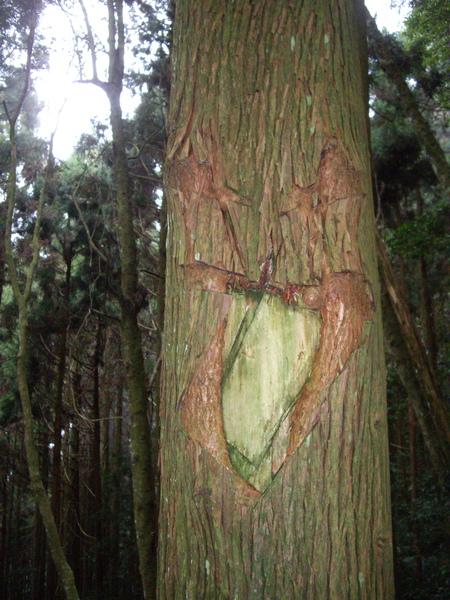 樹幹上的破壞~可惡.jpg