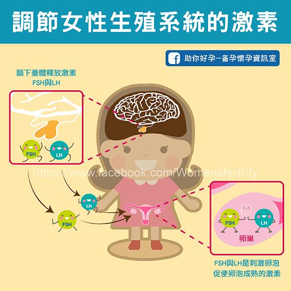 20161123_2-2:調節女性生殖系統的激素.jpg