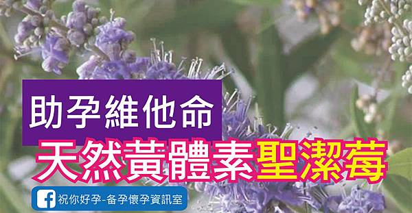 黃體素達人聖潔莓優化02-01.jpg