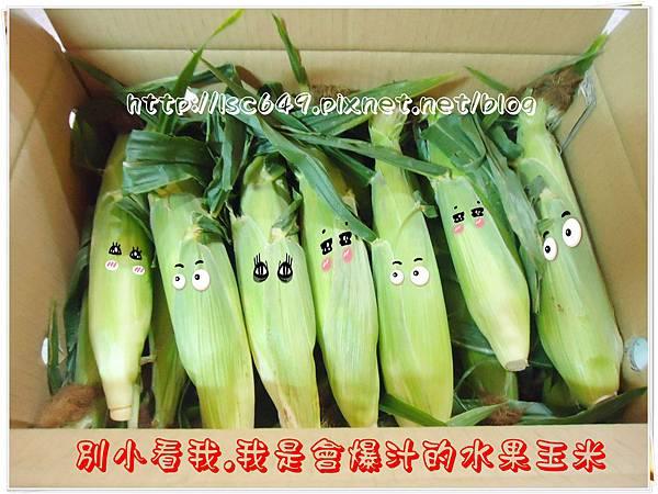 DSC08890玉米.JPG
