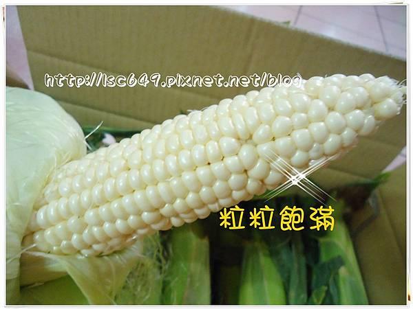 DSC08896玉米1.JPG