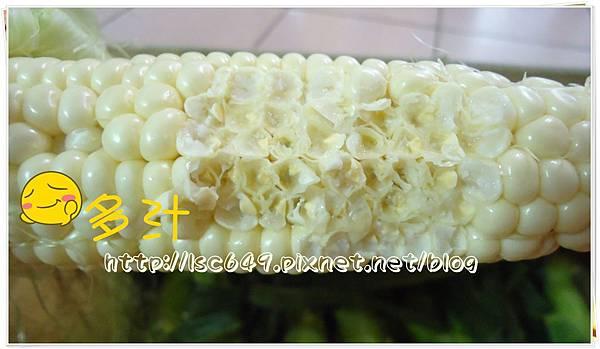 DSC08899玉米2.JPG