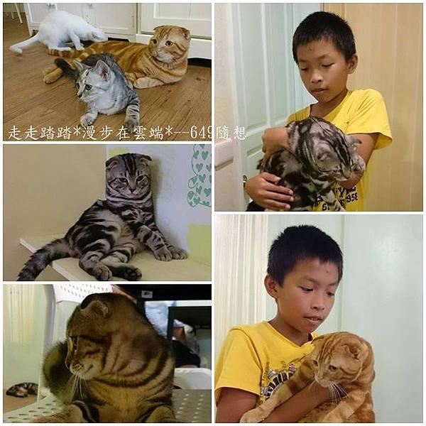 cats貓.jpg