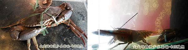 cats螃蟹.jpg
