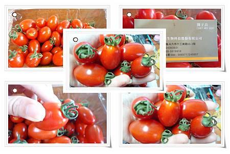 DSC05128蕃茄.jpg