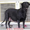高山犬1.jpg