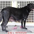 高山犬3.jpg