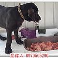 高山犬美牙5.jpg