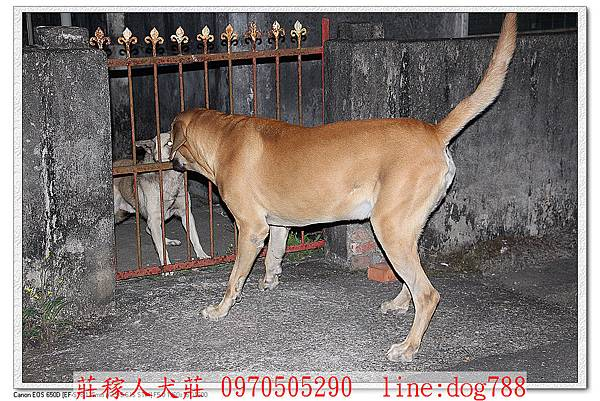 高山犬巡邏2.jpg