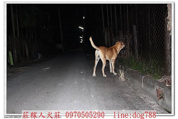 高山犬巡邏5.jpg