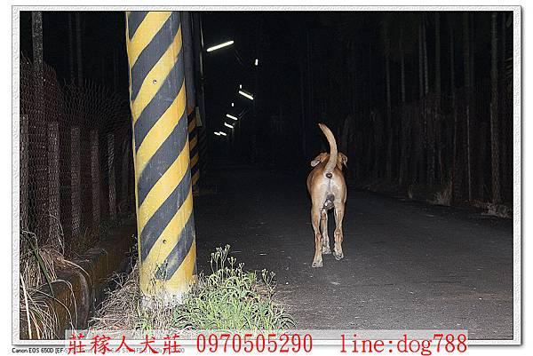 高山犬巡邏7.jpg