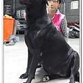 大種母高山犬賓果5.jpg