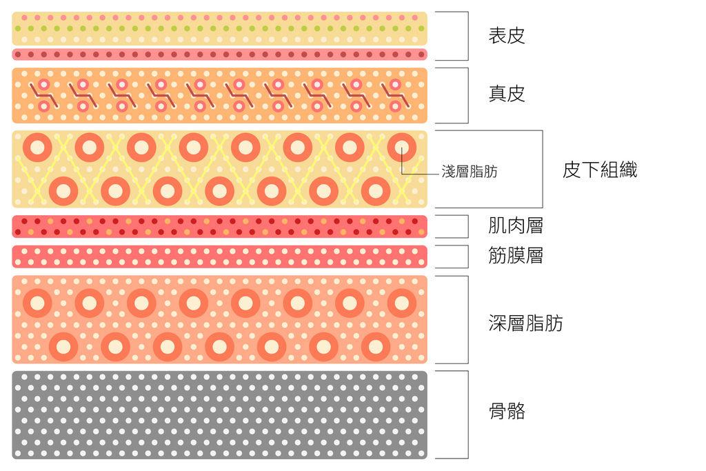 上立皮膚剖面圖.jpg