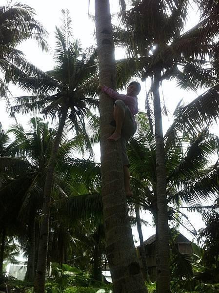 口渴需要攀岩技巧 才能喝到coconut水
