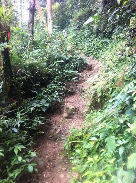 一路陡坡Q比在頂端等我們