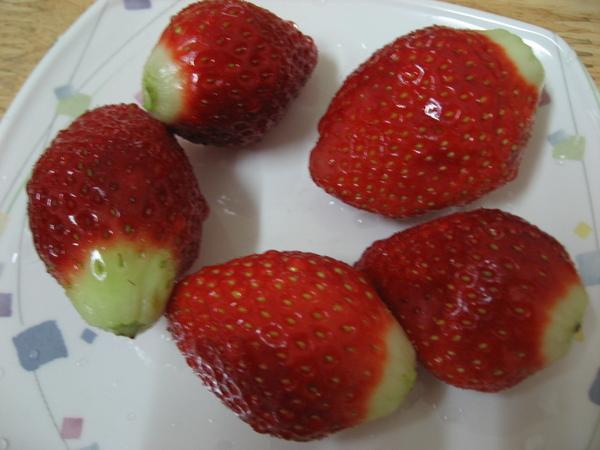 大顆的韓國草莓