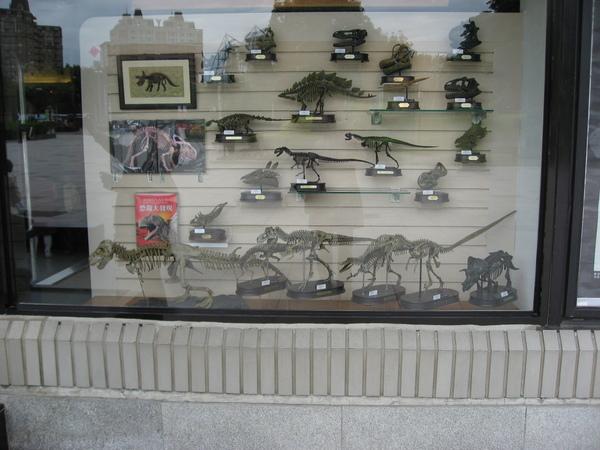 恐龍的照片