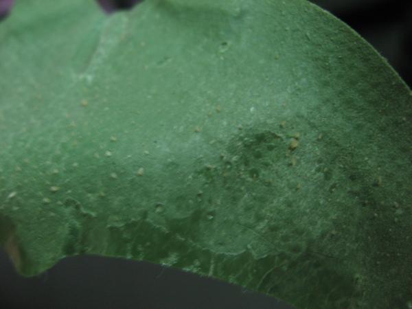 skin food綠藻妙鼻貼之使用完情形2