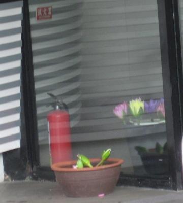 黑亼門口的蓮花