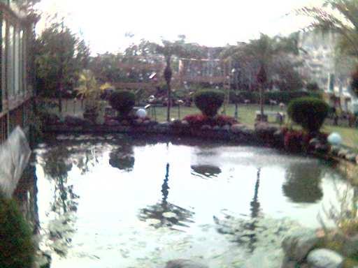 紙箱王內的池塘.jpg