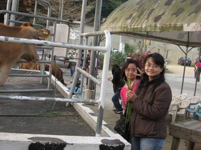 佩馨跟我在餵牛吃牧草.JPG